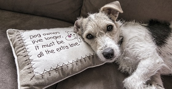 5 Ways Pets Can Add Love to Your Retirement